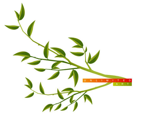 Tree Branch with Green Leaves .  Vector