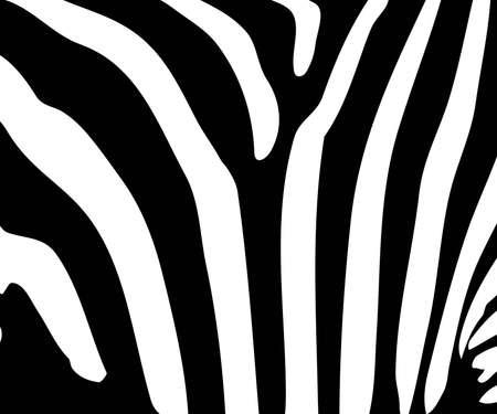 Illustration of black and white zebra stripes.  Vector