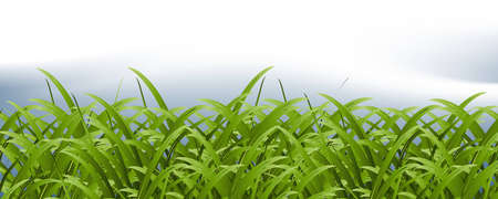 verdure: Green Grass and pure sky background, spring season. Illustration
