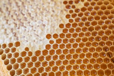 Frames of honeycombs. Fresh honey. Natural organic bee product. Healthy lifestyle. Close-up photo. Standard-Bild