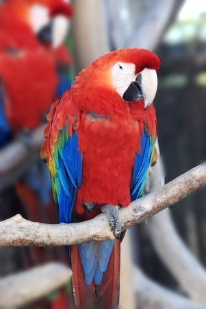 a portrait of a parrot