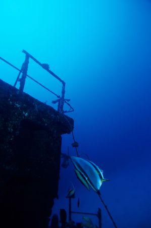 fascinate: Adventure Diving on a sunken Ship wreck