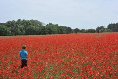 flowering field: Poppy Field