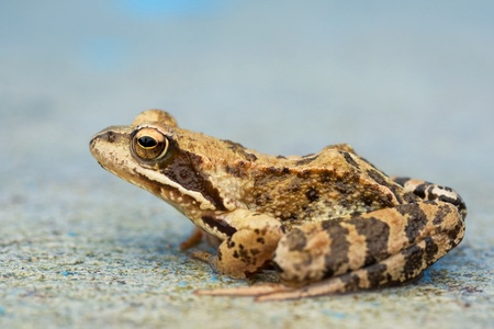 Young wet toad sitting on the concrete Stock Photo