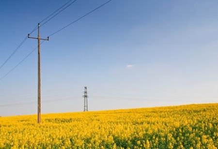 Rape field and the blue sky Stock Photo