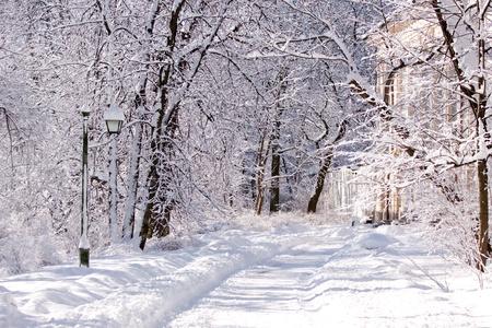 Snowy Warsaw park photo