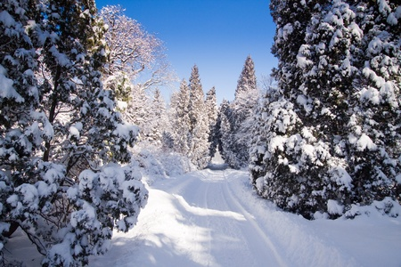 Snowy Warsaw park Lazienki,  during winter