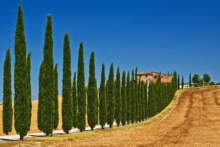 Tuscany farm view in the summer