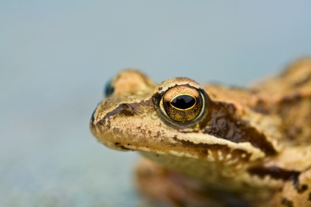 Young wet toads head close up