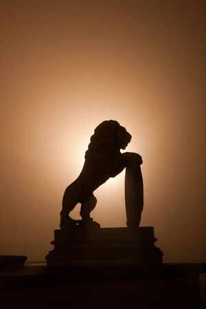 Lion silhouette during the misty night