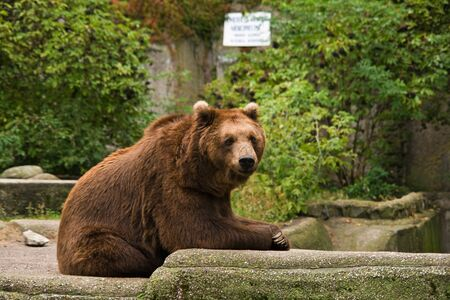 Bear relaxing on the rocks