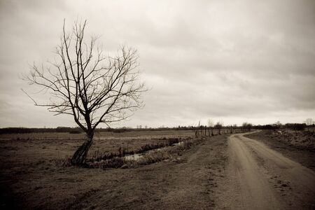 A perspective of a country road with a lonely tree in Biebrza National Park in Poland