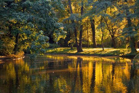 Golden reflections in the water of a pond on a calm day Stock Photo