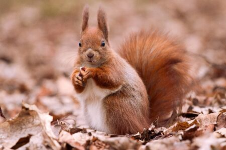 Little cute squirrel on the leaves Stock Photo