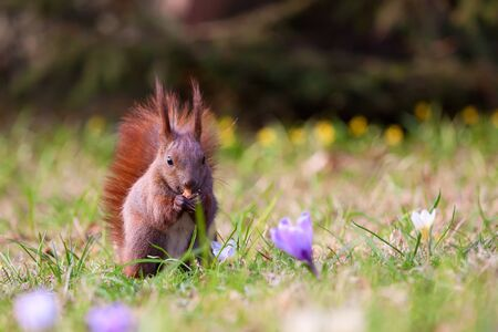Squirrel amongst flowers in the grass photo