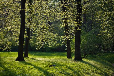 Light shining through trees during late spring day