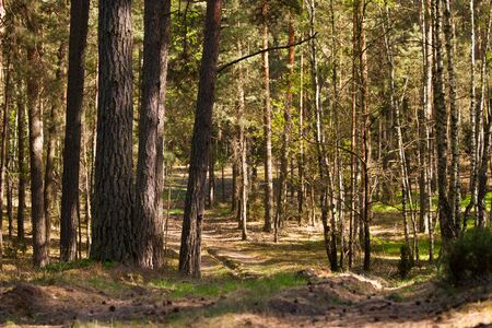 European forest,  Poland,  Biebrza region