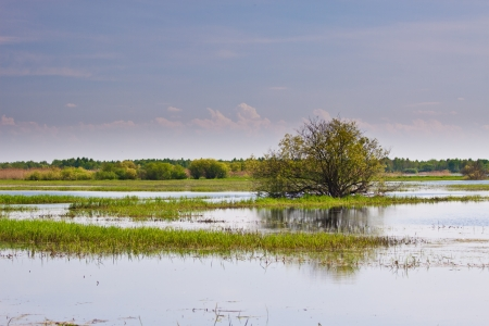 Tree in the middle of Biebrza swamps Stock Photo