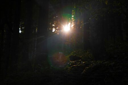 shinning light: Rayo de luz brillando en el bosque