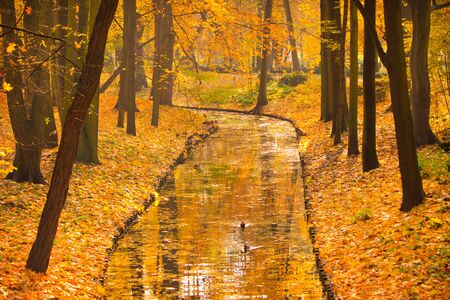 lazienki: Warsaw Lazienki park during golden autumn Stock Photo