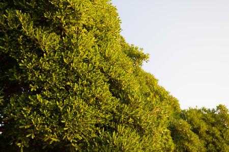 spring green: Green bushes in Zadar city Stock Photo