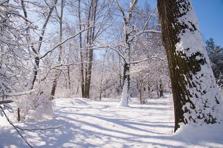 Snowy winter park Lazienki in Warsaw, Poland Stock Photo
