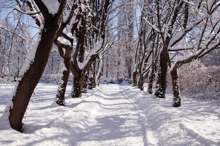 Snowy Warsaw park Lazienki, Poland