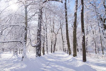 Snowy path amongst trees in Warsaw Lazienki park, Poland