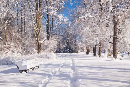 Branches covered with snow in Warsaw park Lazienki during winter, Poland