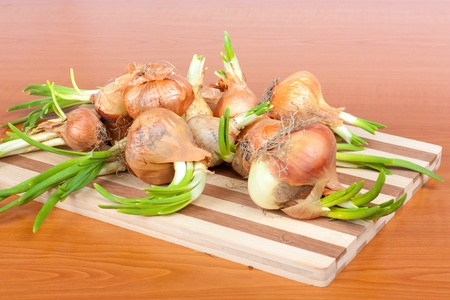 Growing onion bulbs with fresh green sprouts on cutting board photo
