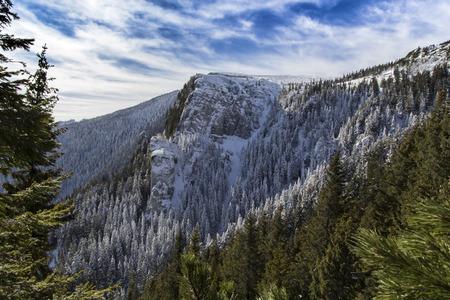 rocky mountain juniper: Winter mountain landscape of Ceahlau mountains in Romania