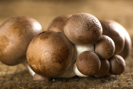 bella: Organic Brown Baby Bella Mushrooms against a canvas background Stock Photo