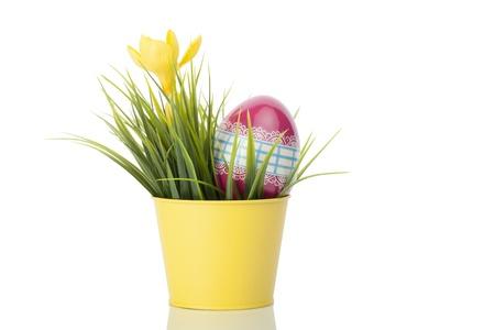 Gele krokus bloem in een gele pot met een versierd ei tegen een witte achtergrond.