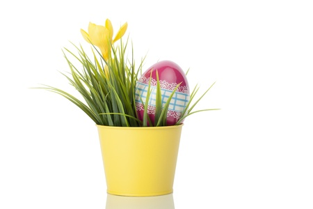 Yellow crocus flower in a yellow pot with a decorated egg against a white background.