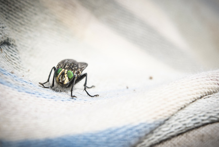 entomology: Fly on canvas