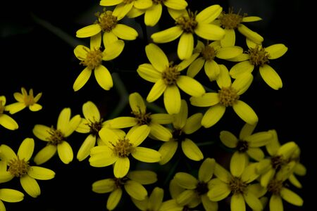 ornamentations: Variety of yellow flowers