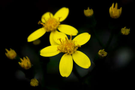 yellow: yellow flowers