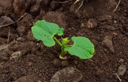 botanica: Plant