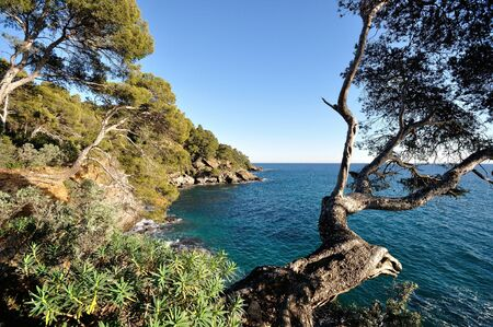 landscape of the Mediterranean in the Var, southern France, under the maritime pines overhanging the sea
