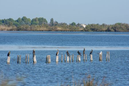 pond with birds on poles in Camargue