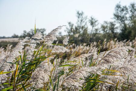 landscape of Camargues in the south of France. Ornithological nature reserve