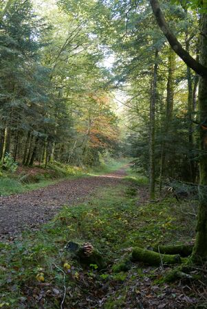 walk in the Brittany countryside in Finistere, France. discovery of the flora and fauna of the forests