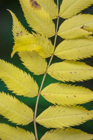 黄色の葉のデザイン