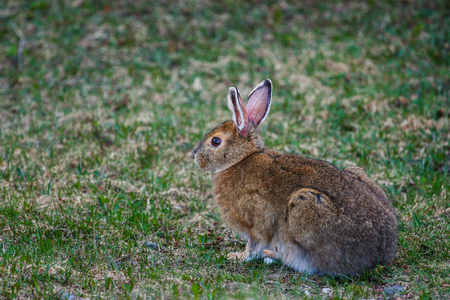 bunny eating grass in the wild Stock Photo