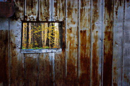 looking at a yellow forest through rusty metal window Stock Photo