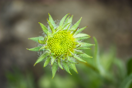 small green and yellow flower
