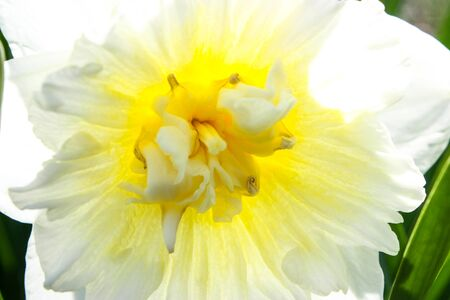 white and yellow flower Stock Photo