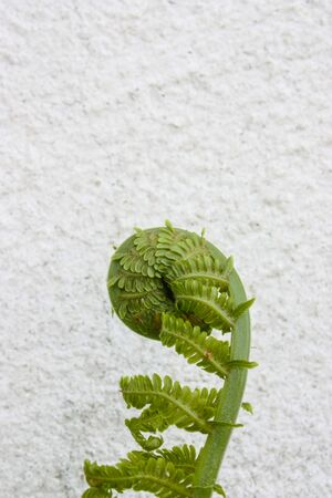 growing plant on a white wall