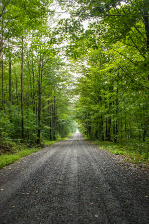 gravel road in a green forest