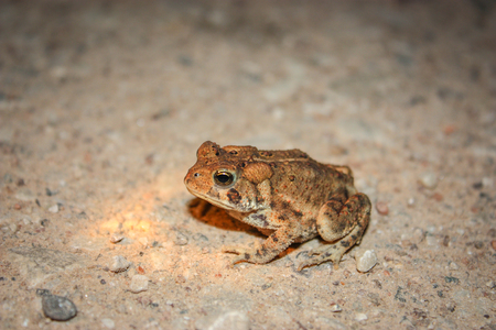 small frog with orange dots Stock Photo